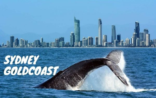 paket tour goldcoast australia